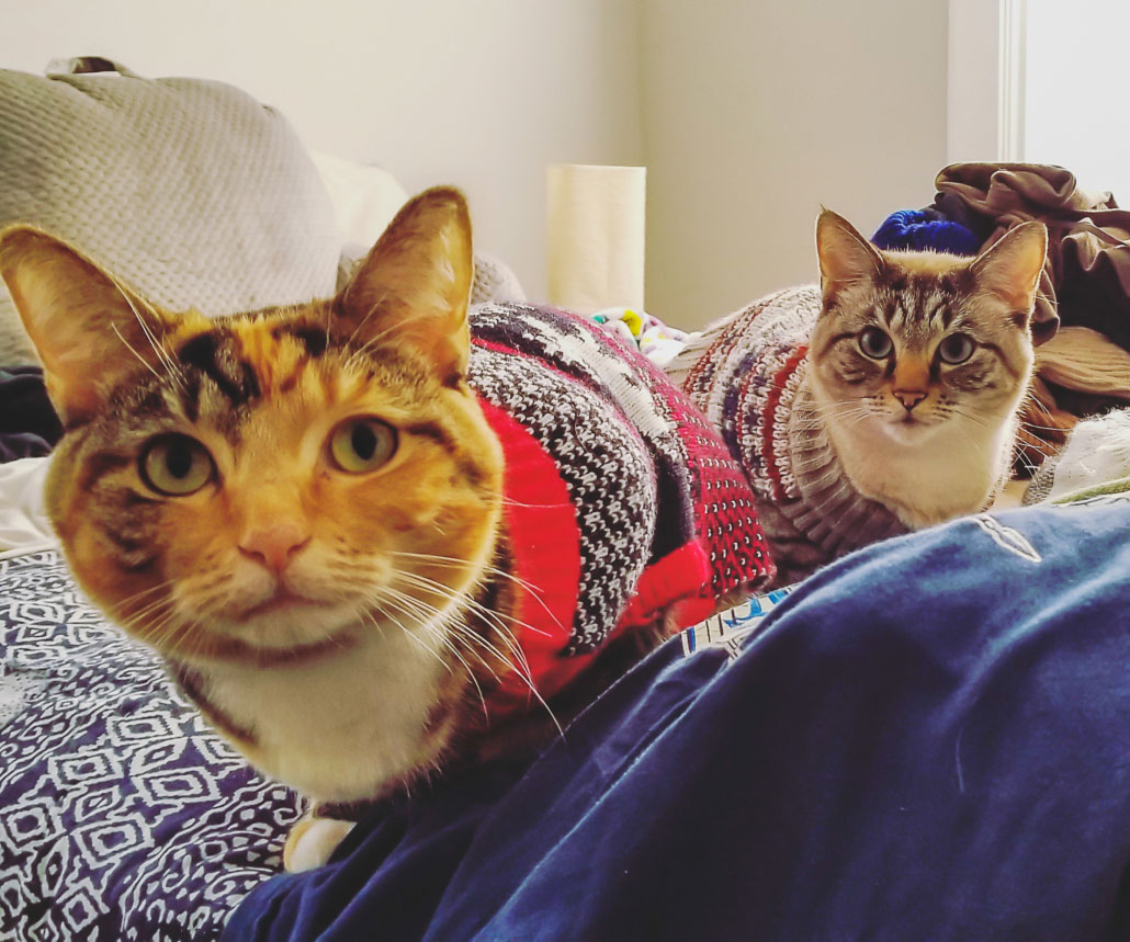cat, cats, sweaters, cat clothes